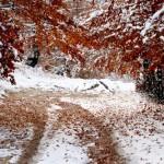 peisaj de iarna grabita