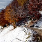 copaci de toamna in zapada