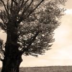 copac singuratic - sepia